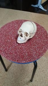横浜泉区のあきば整体院にある頭蓋骨模型
