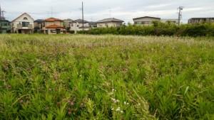 横浜市泉区中田の公園風景