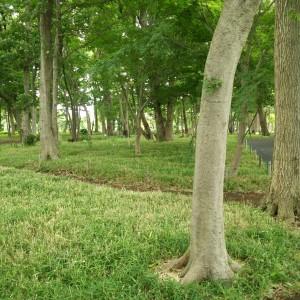 横浜市泉区立場駅のあきば整体院院長は朝散歩で公園へ
